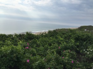 Nauset Beach from on top of the dunes.