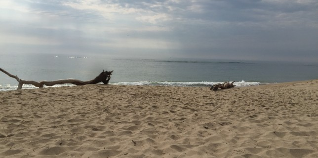 Travel in New England: Cape Cod Beach Hopping